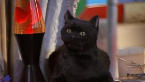 Salem cat. Animals in science fiction and fantasy